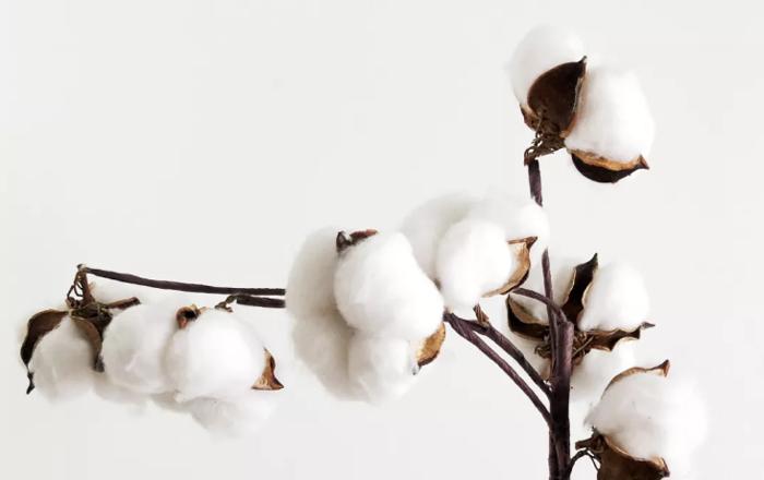 ALD卓力能:选取优质棉芯材料的四个评判标准!